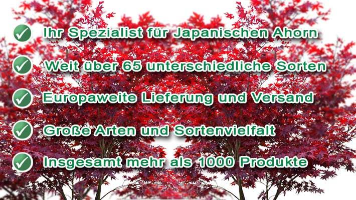 Baumschule Japanischer Ahorn Fur Koln Baumschule Nielsen