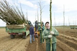 Eine Grüne Ausbildung – Der Baumschulgärtner