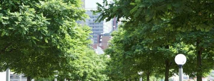 Die grüne Stadt: Urbanes Grün für Mensch und Umwelt